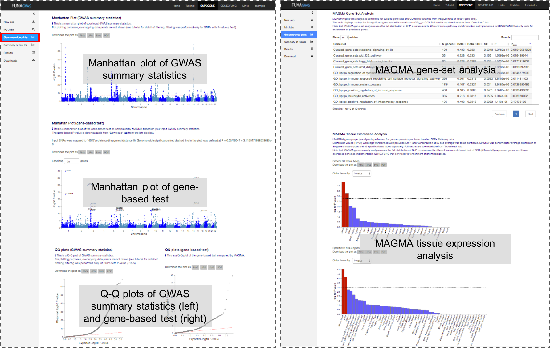 Functional Mapping and Annotation of Genome-wide association studies